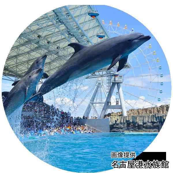 名古屋港水族館イメージ